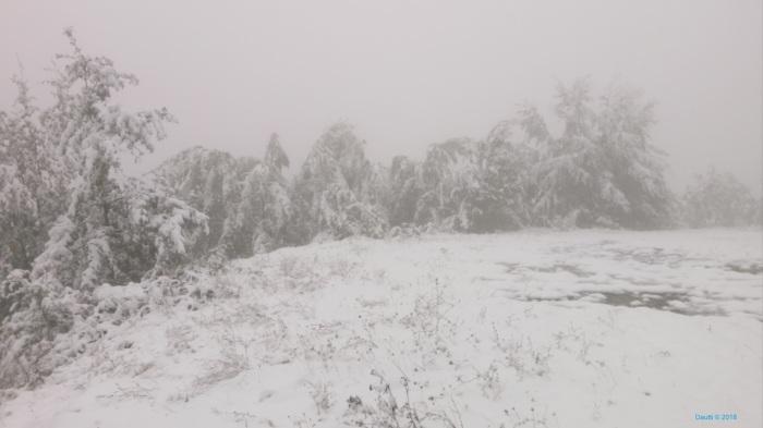 Dimri